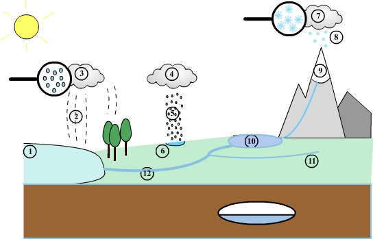 Water Cycle Diagram Of Steps Layout Wiring Diagrams